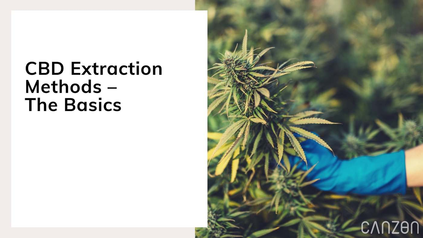 CBD Extraction Methods – The Basics