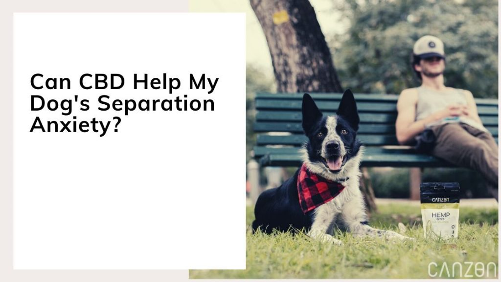 Can CBD Help My Dog's Separation Anxiety?