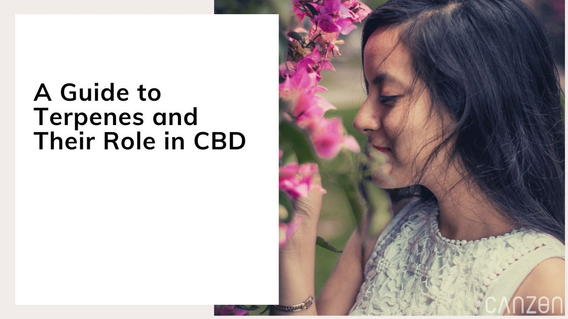 A Guide to Terpenes and Their Role in CBD