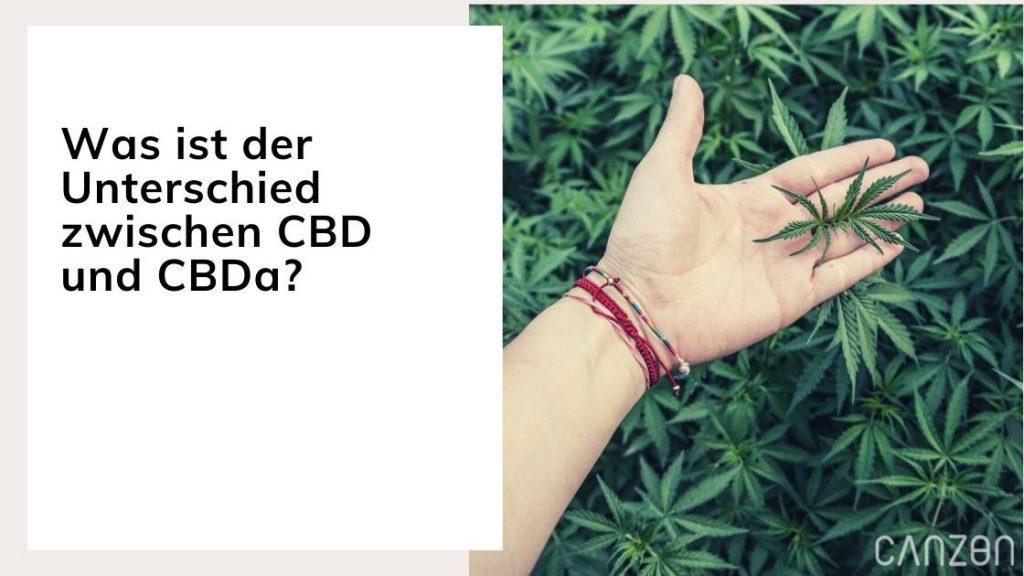 Was ist der Unterschied zwischen CBD und CBDa?