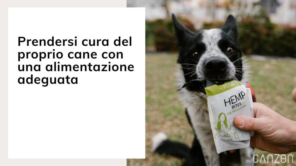 Prendersi cura del proprio cane con una alimentazione adeguata
